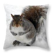 Squirrel Saying Feed Me Please At Niagara Falls Throw Pillow