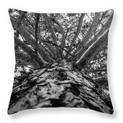 Squirrels View Looking Up Throw Pillow