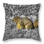 Squirrling Around Looking For Nuts Throw Pillow