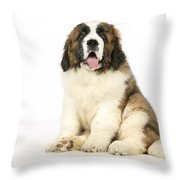 St Bernard Dog Throw Pillow