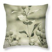 St. John's Wort - Dreamers Garden Series Throw Pillow