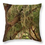 St Simons Island Oaks Throw Pillow