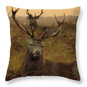 Williams Fine Art Stag Party The Series  Throw Pillow