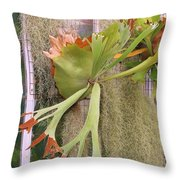 Staghorn Fern Throw Pillow