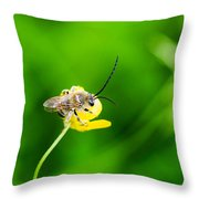 Staking A Claim - Featured 3 Throw Pillow
