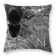 Stalking Cat Throw Pillow