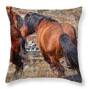 Stallions Gone Crazy Throw Pillow