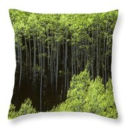 Stand Of Birch Trees New Growth Spring Rich Green Leaves Throw Pillow