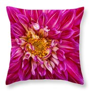 Standard Beautiful Dahlia Throw Pillow