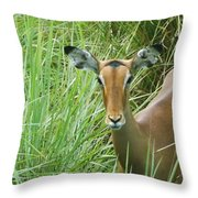 Standing In The Grass Impala Antelope  Throw Pillow