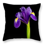 Standing Iris Throw Pillow