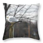 Standing Seagull Throw Pillow