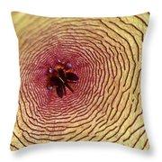 Stapelia Grandiflora - Close Up Throw Pillow