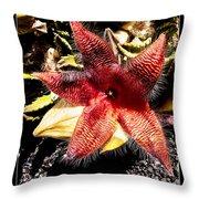 Stapelia Grandiflora Starfish Cactus Throw Pillow