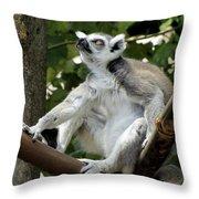 Lemur Stare Throw Pillow