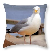 Stare Of A Seagull Throw Pillow
