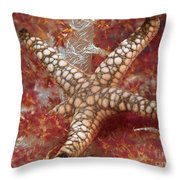 Starfish In Soft Coral Throw Pillow