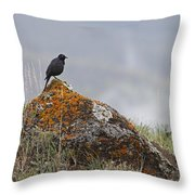 Starling   #5924 Throw Pillow