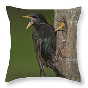 Starling And Young Throw Pillow