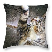 Starry Night Kitty Style - Featured  In Comfortable Art Group Throw Pillow