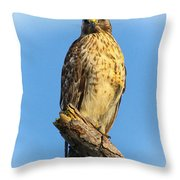 Stately Red-shouldered Hawk Throw Pillow