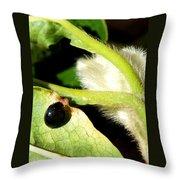 Steel Blue Ladybird Throw Pillow