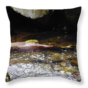 Steelhead Resting In The Shallows Throw Pillow