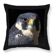 Steely Stare Throw Pillow