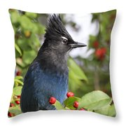 Steller's Jay And Red Berries Throw Pillow