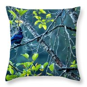 Steller's Jay In A Tree Throw Pillow