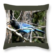 Steller's Jay - Peaking Through Branches Throw Pillow