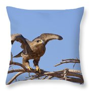 Steppe Eagle Aquila Nipalensis 1 Throw Pillow