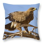 Steppe Eagle Aquila Nipalensis 2 Throw Pillow