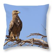 Steppe Eagle Aquila Nipalensis Throw Pillow