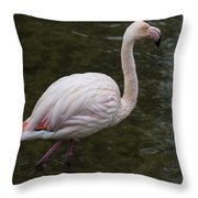 Stepping Out. Throw Pillow
