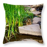 Stepping Stones Across Creek On Lower Palm Canyon Trail In Indian Canyons Near Palm Springs-ca Throw Pillow