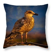 Steven Seagull Throw Pillow