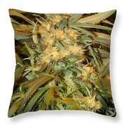 Sticky Subject Throw Pillow