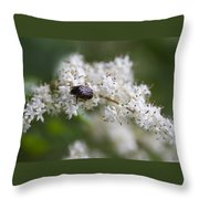 Stiff Dogwood Wildflowers And Beetle Throw Pillow