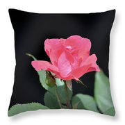 Still Life Portrait Of A Rose Throw Pillow