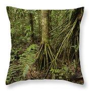 Stilt Roots In The Rainforest Ecuador Throw Pillow