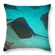 Sting Rays Throw Pillow