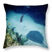 Stingray On The Bottom Throw Pillow