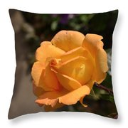 Stirling Rose Throw Pillow