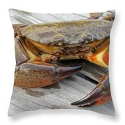 Stone Crab Baby Throw Pillow