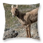 Stone Lamb Throw Pillow