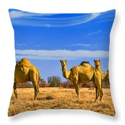 Stop And Stare V2 Throw Pillow