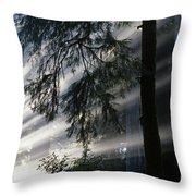Stout Grove Redwoods With Sunrays Breaking Through Fog Throw Pillow