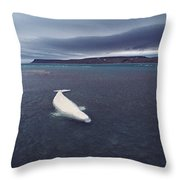 Stranded Beluga Whale Awaiting Incoming Throw Pillow
