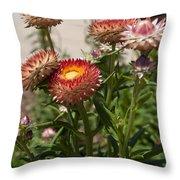 Straw Flowers Xerochrysum Bracteatum Throw Pillow